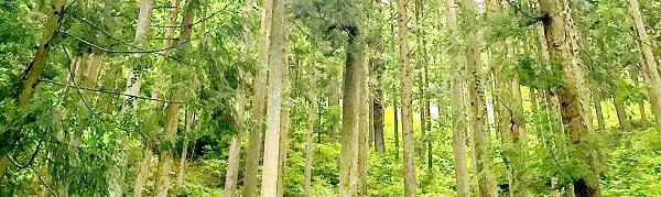 杉林10x3.jpg