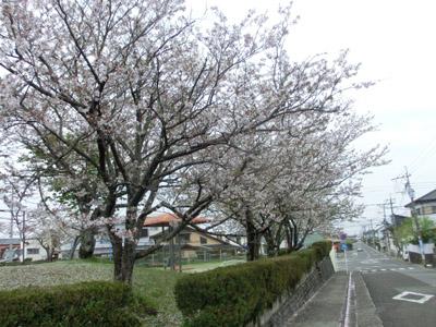 matumotosakura2015.04.02 005.jpg