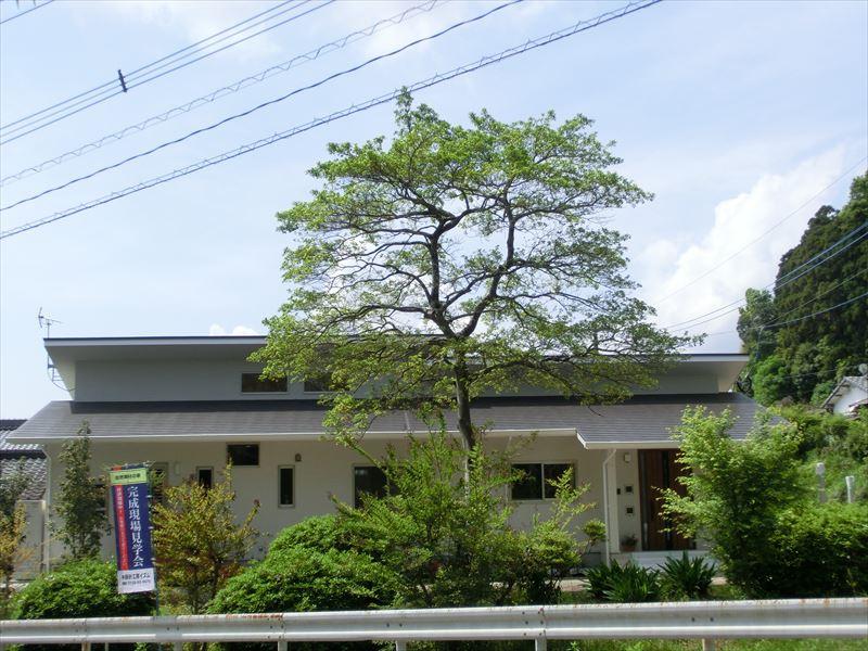 周りの木々に溶け込むように佇む自然と住む人に優しい家